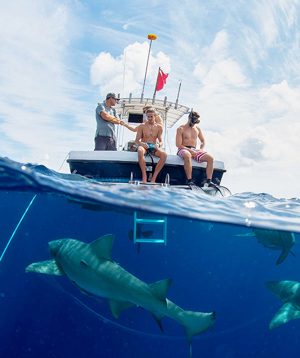 An image of the Florida Shark Diving Team