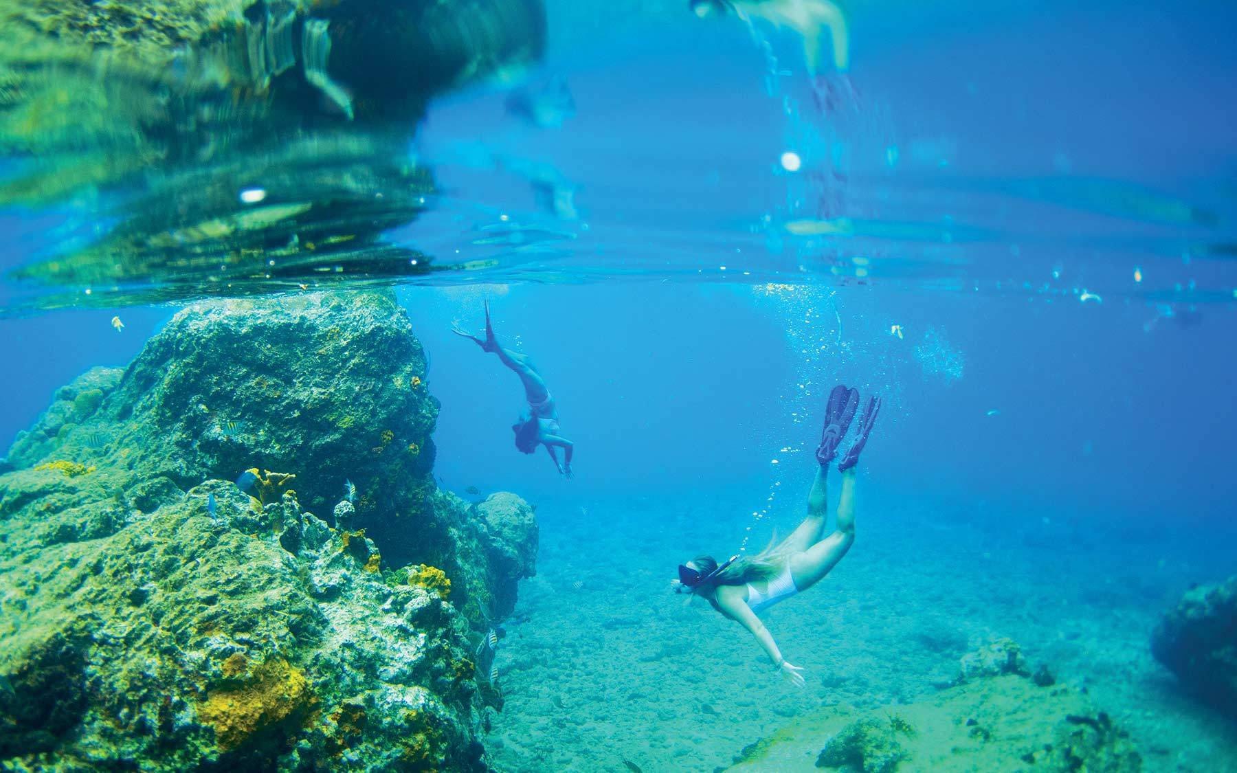 Background image - swimmers diving in a reef
