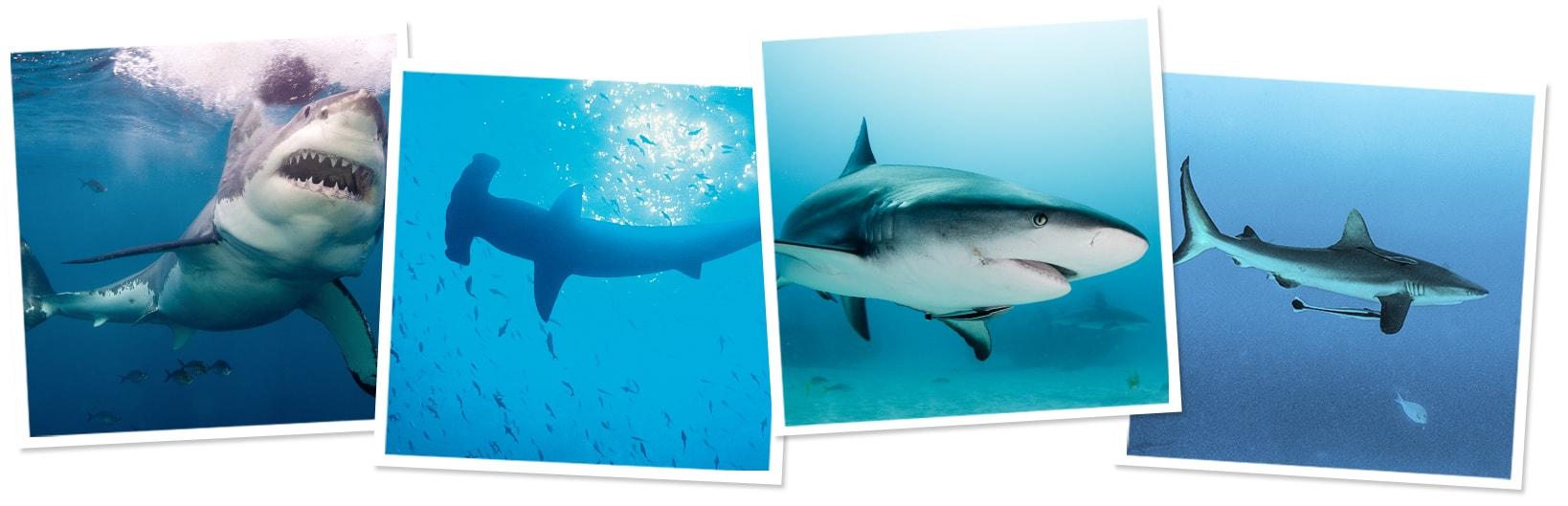Sharks around the world!